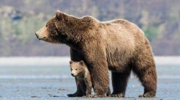 Disney's Bears Movie