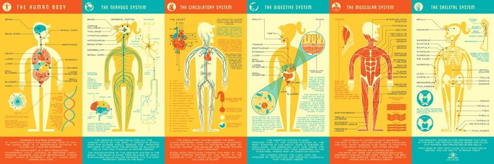 Human Anatomy Print
