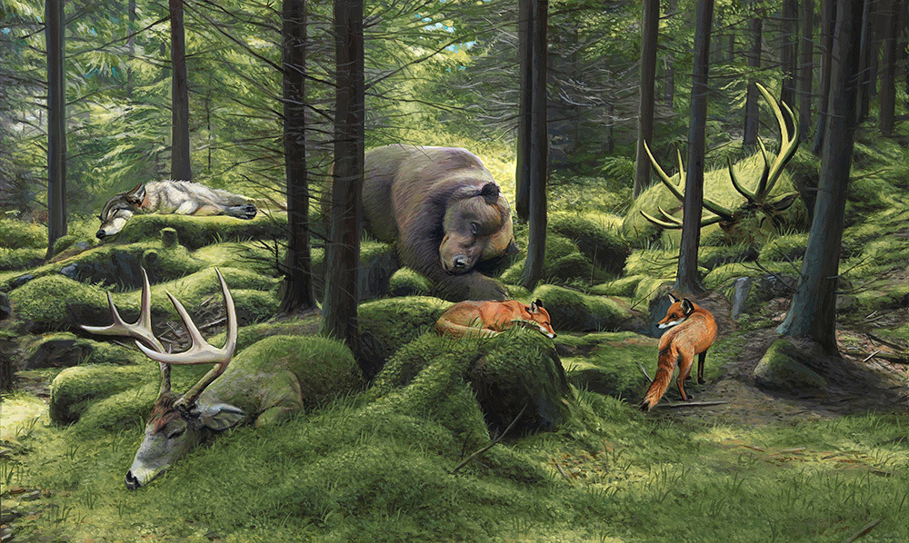 The Sleeping Woods Print by Josh Keyes